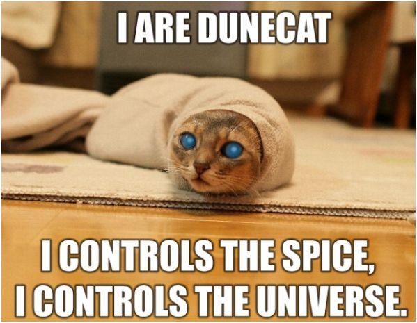dunecat_dune.jpg